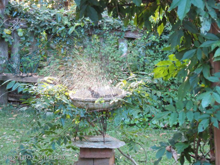 171018_blog challenge_letter I_birdbath07