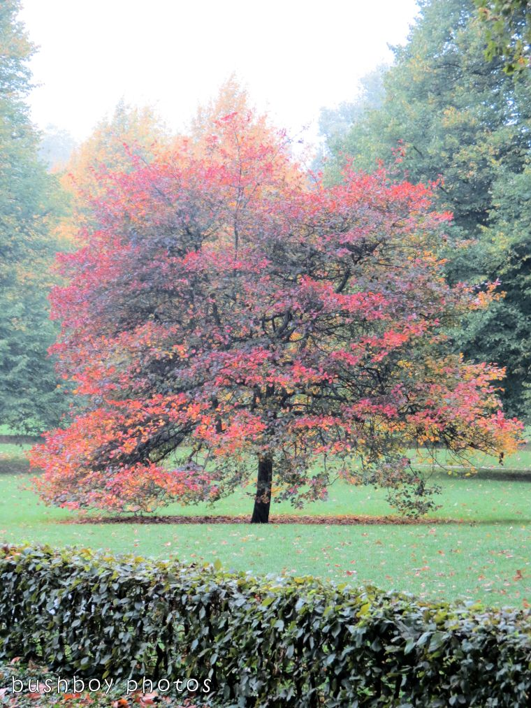 171019_blog challenge_fall_tree
