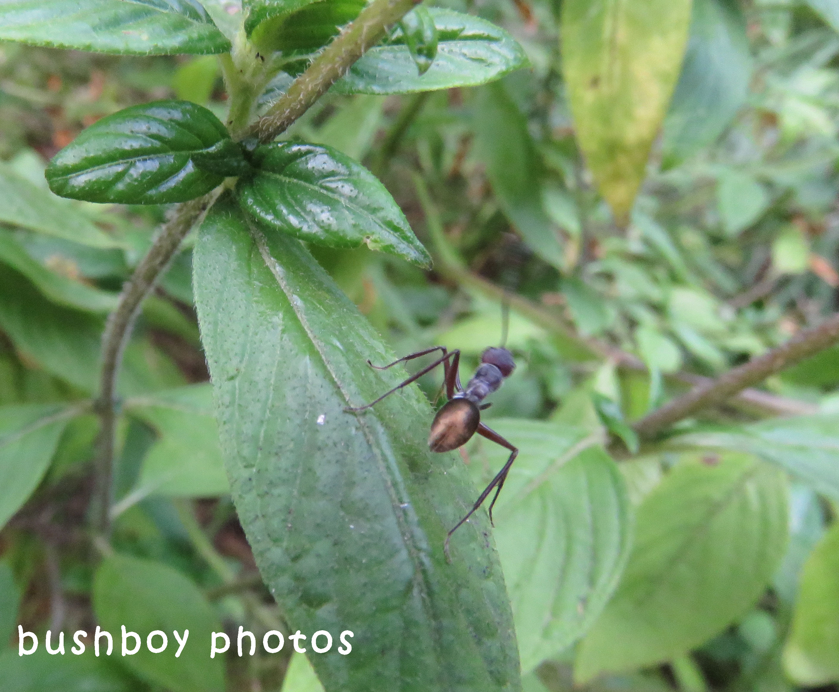 ant_pentas_named_home_sept 2017