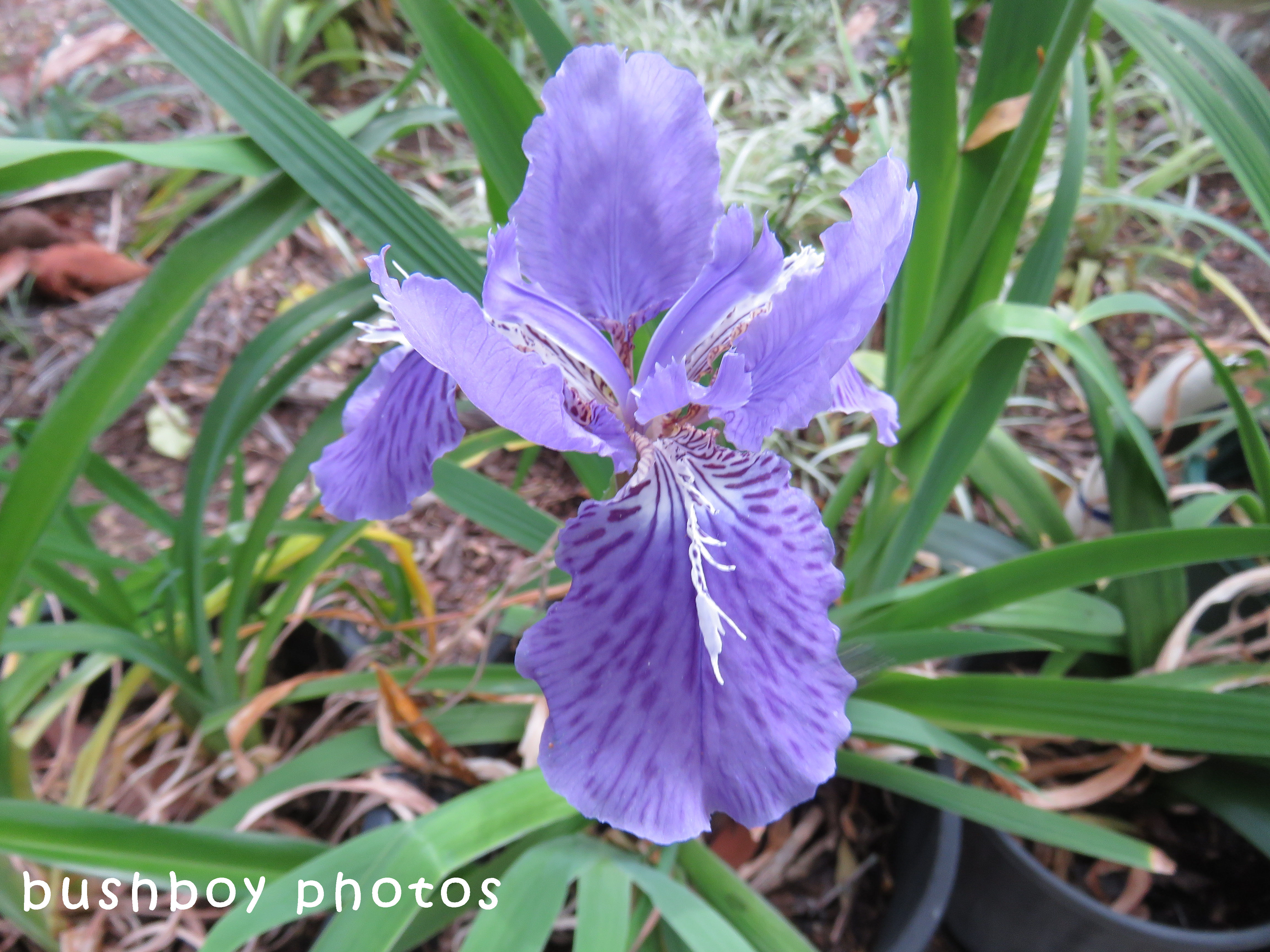 iris_geoffs_named_home_sept 2017