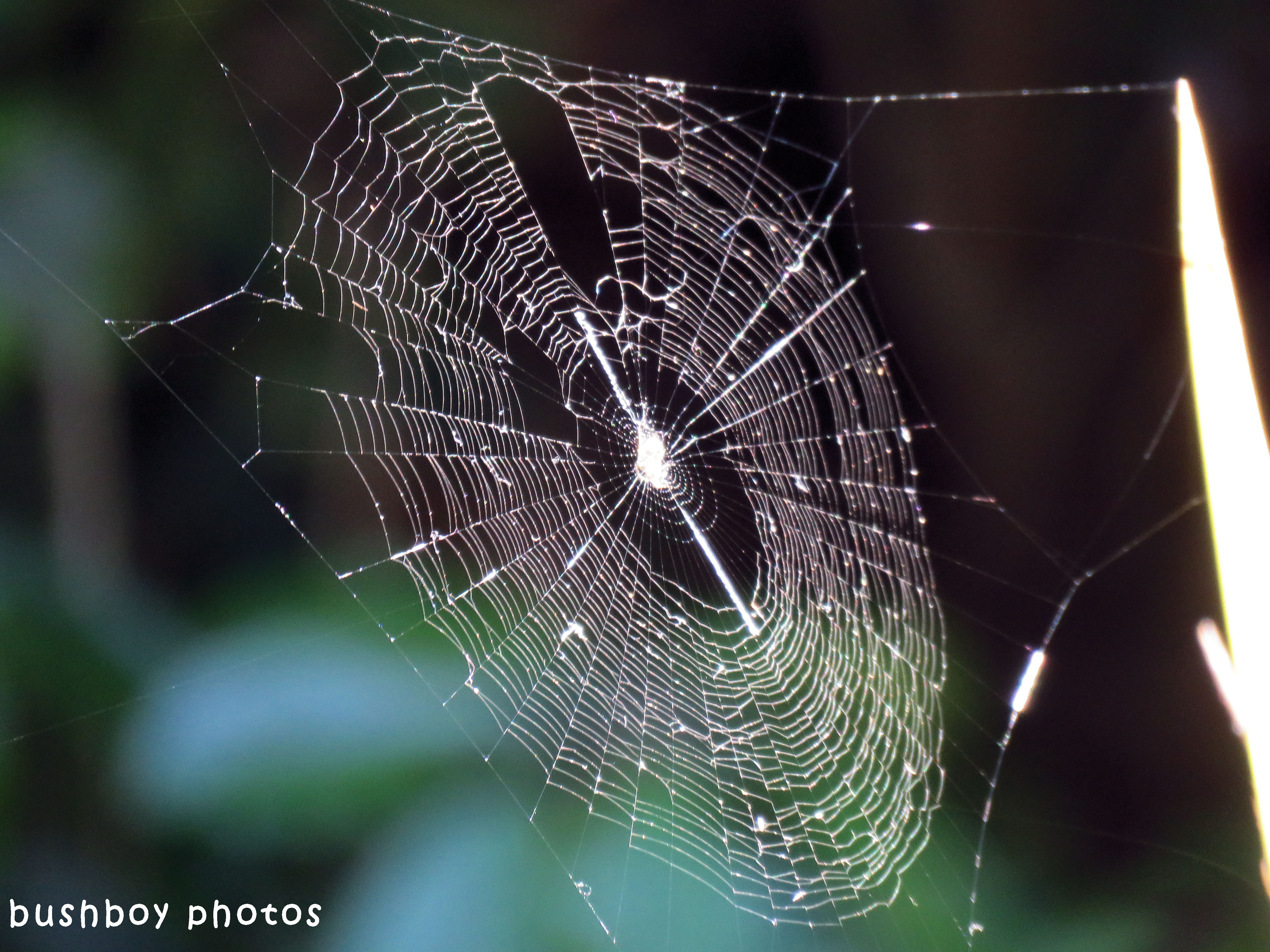st andrews cross spider_web_named_home_sept 2017
