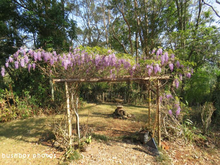 wisteria04_named_binna burra_sept 2017