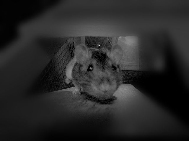 171101_blog challenge_pets_rat