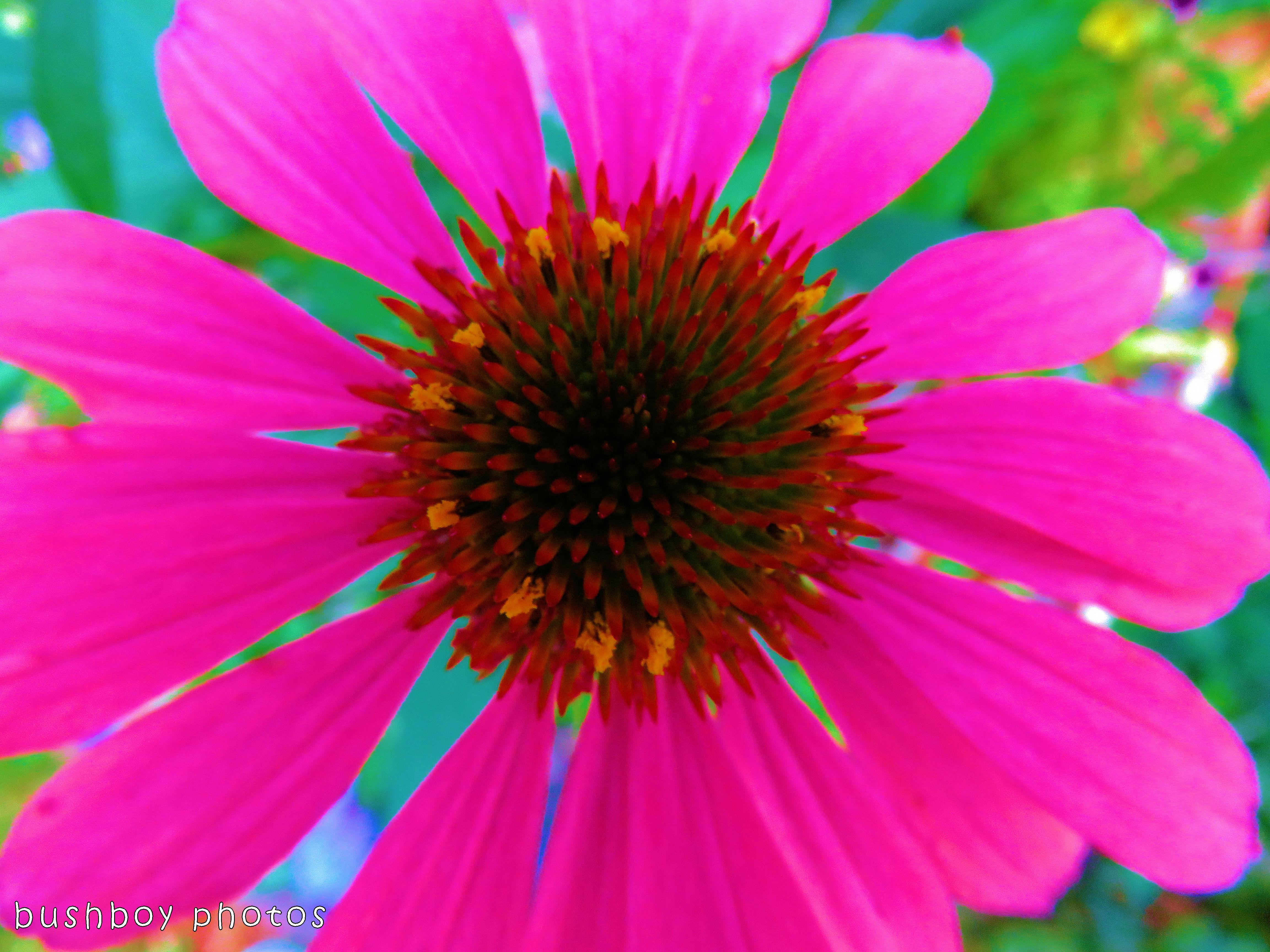 171117_experimental_flower_colour highlight