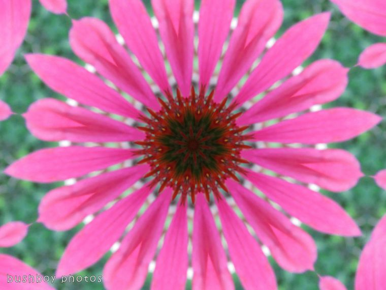 171117_experimental_flower_effect02