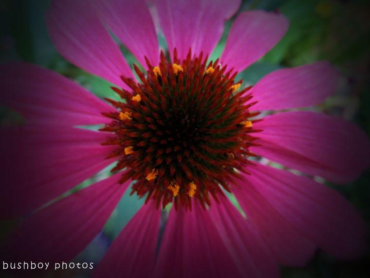 171117_experimental_flower_effect03