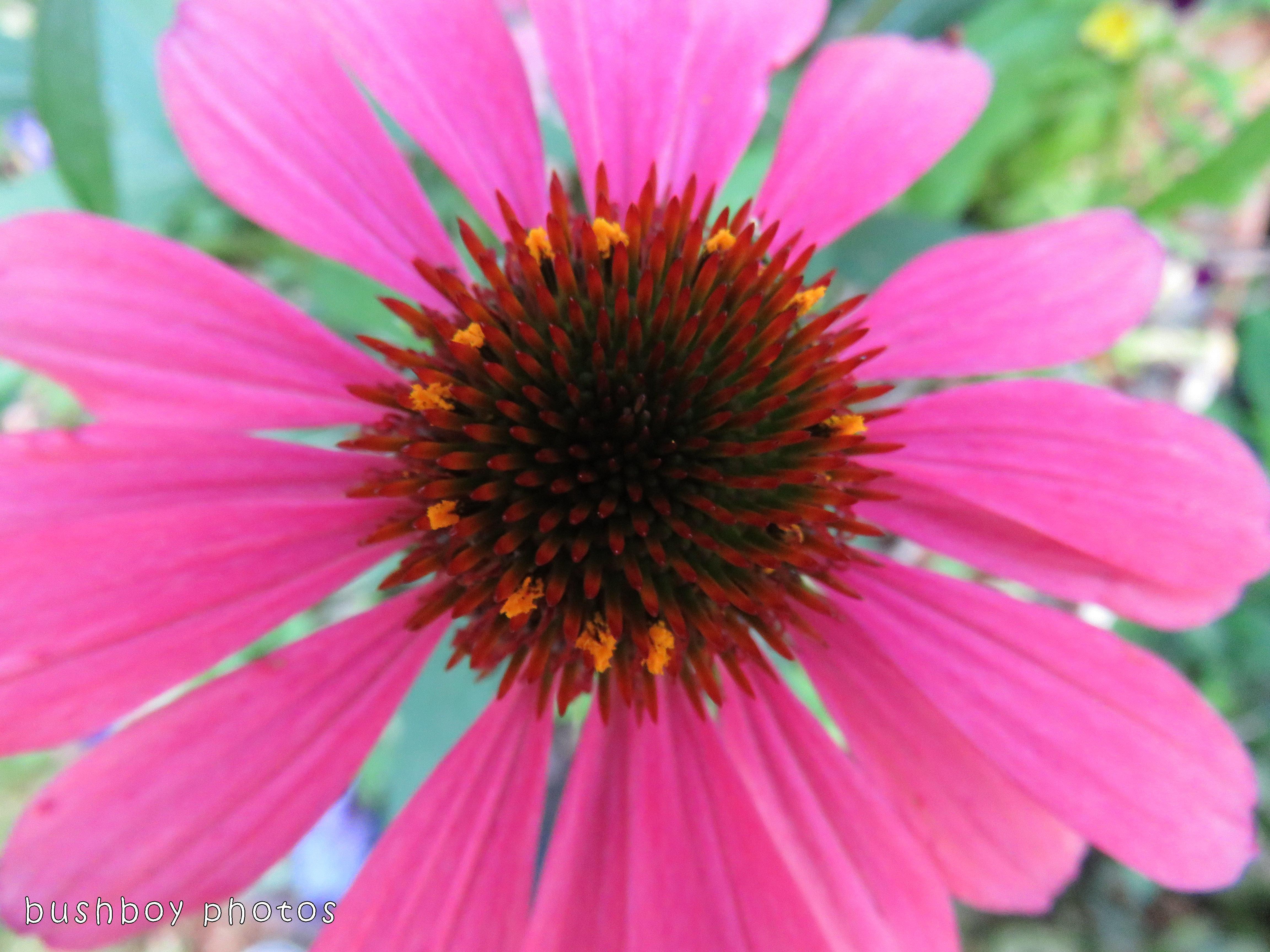 171117_experimental_flower_original
