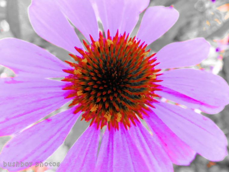 171117_experimental_flower_selective colour