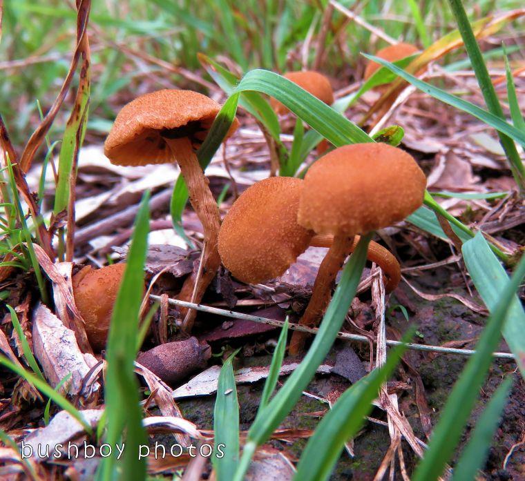 171120_blog challenge_mushroom_mushroom05