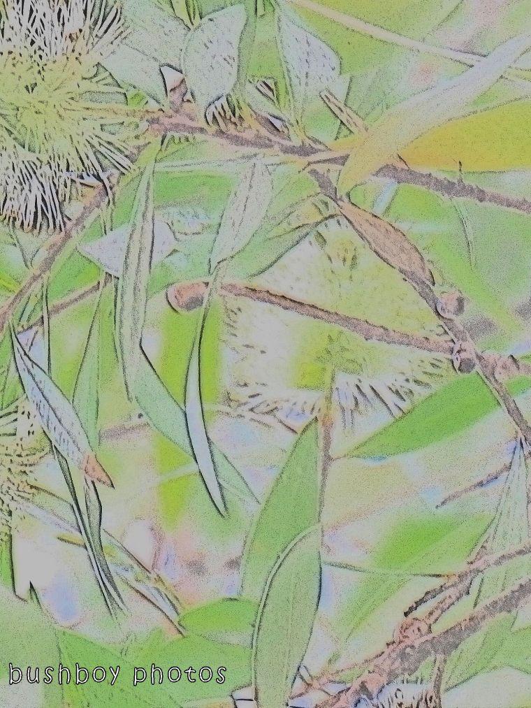 171123_blog challenge_transformation_paperbark flower04