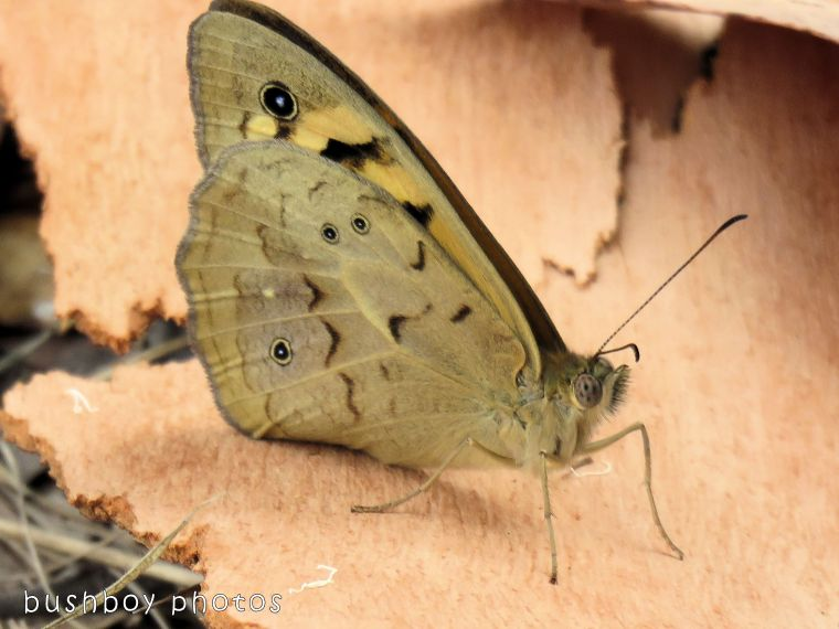 butterfly04_named_home_oct 2017
