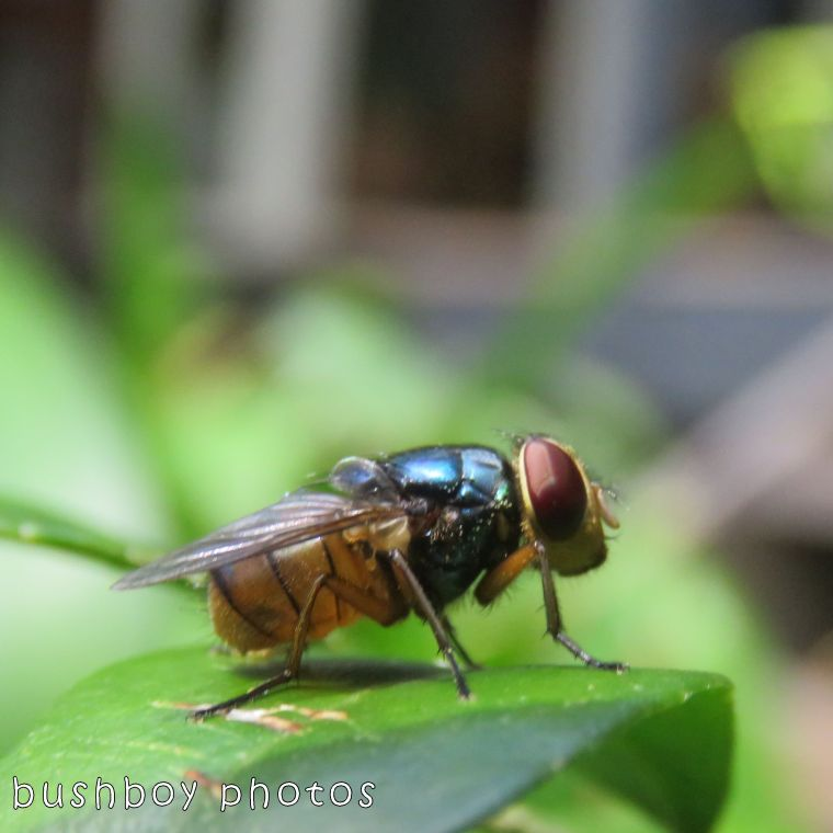fly_named_binna burra_oct 2017