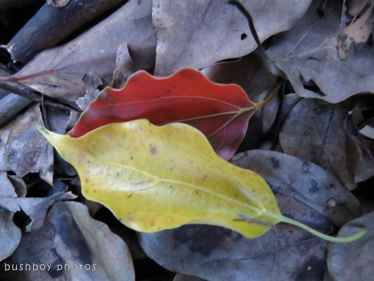 leaf01_named_binna burra_oct 2017