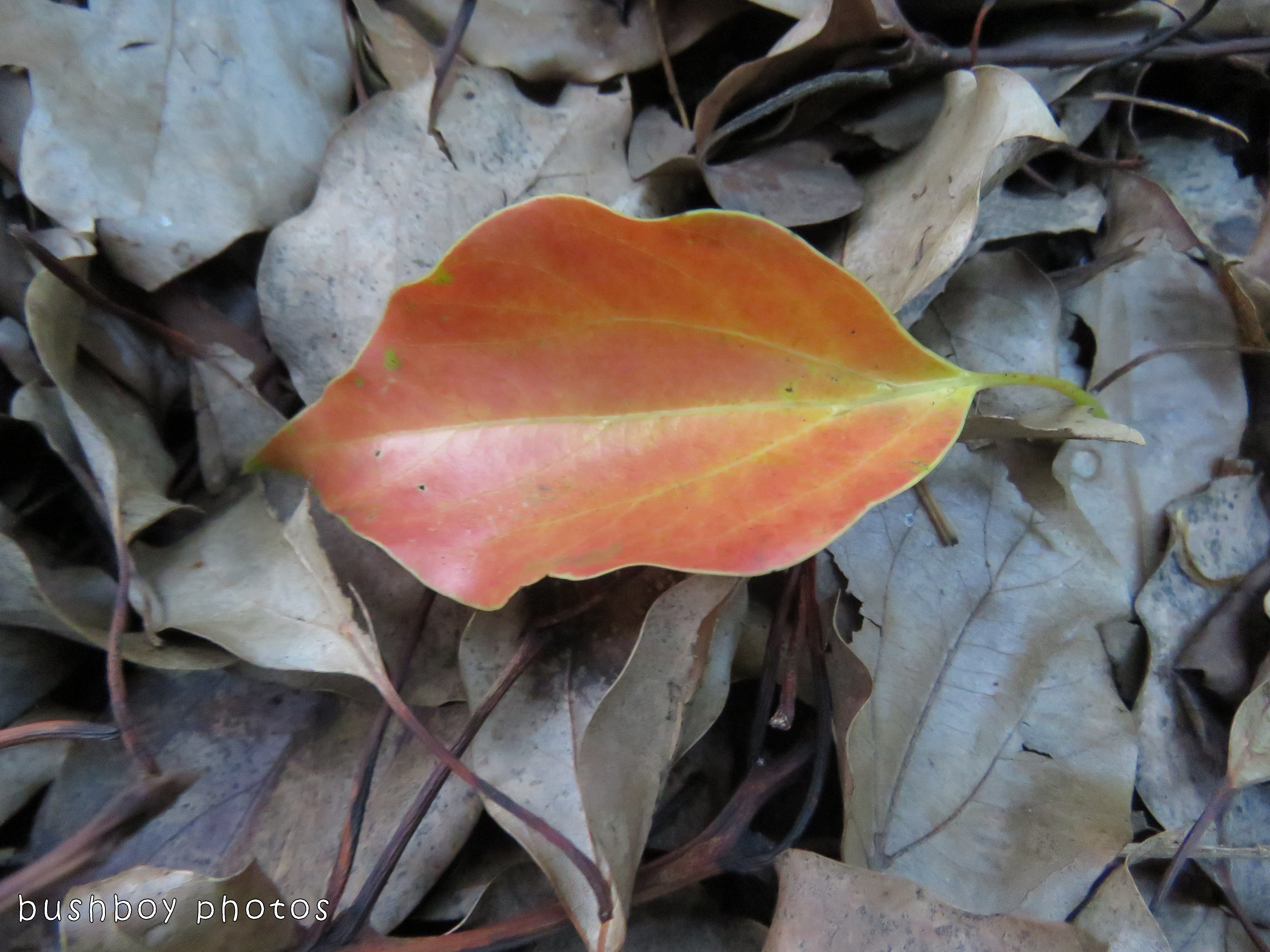 leaf02_named_binna burra_oct 2017