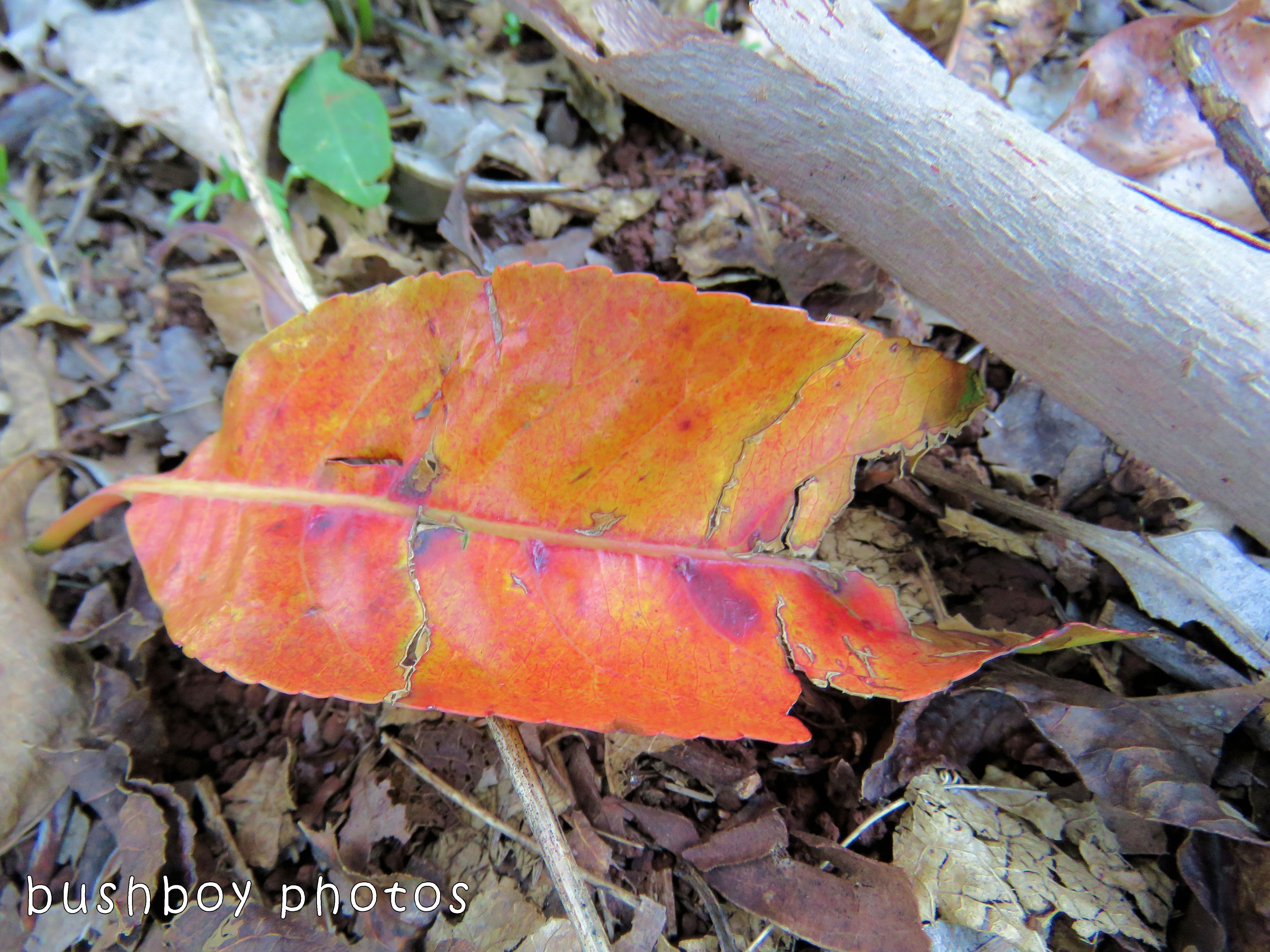leaf04_named_binna burra_oct 2017