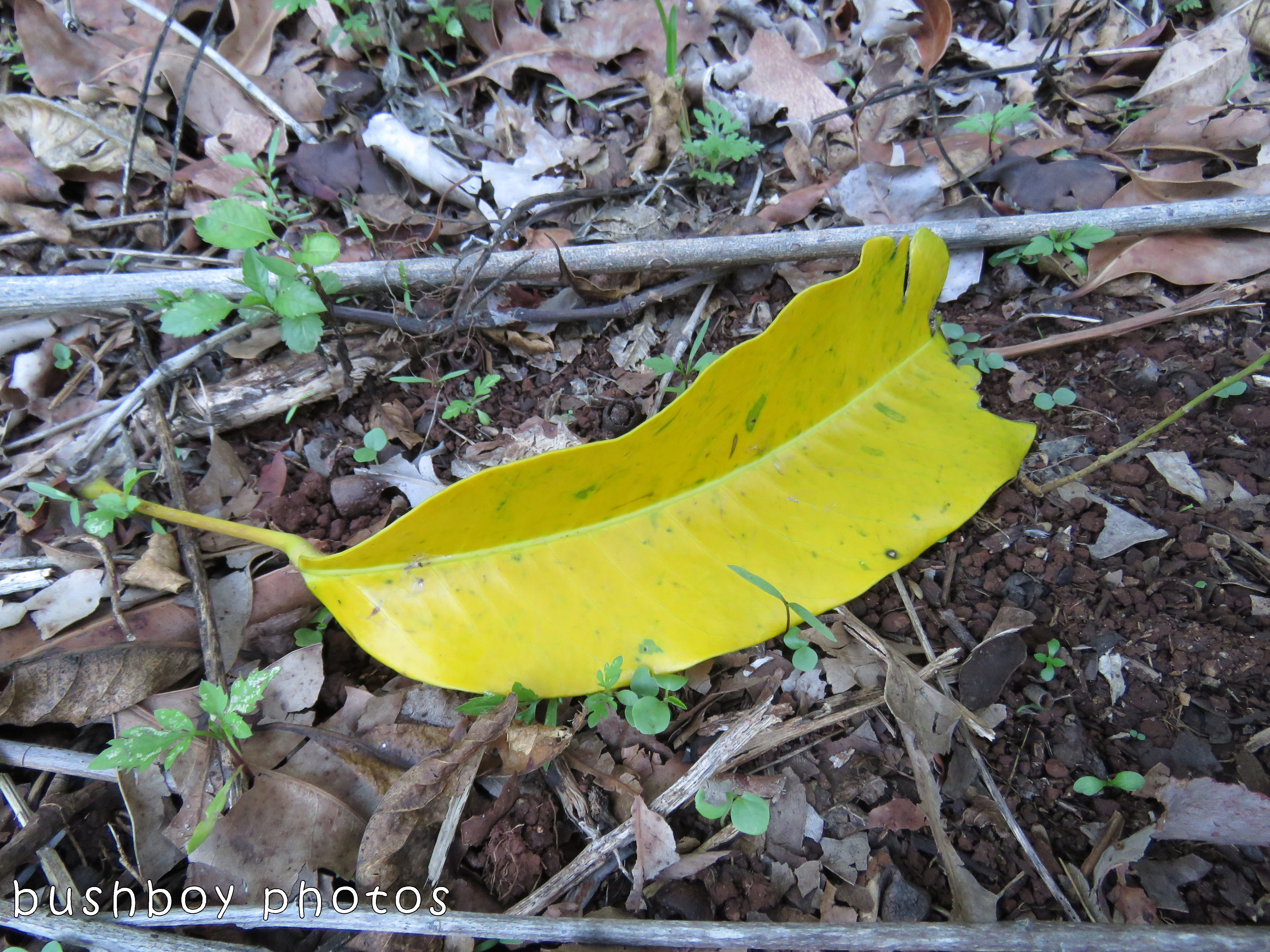 leaf05_named_binna burra_oct 2017