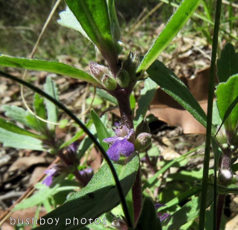 native flowers_hairs_purple01_named_home_oct 2017
