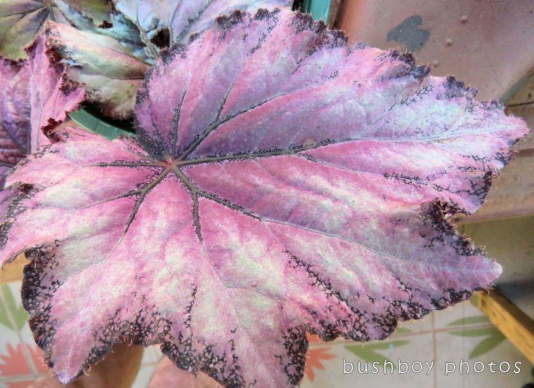1`71204_blog challenge_blackandwhite_texture_begonia leaf03_colour