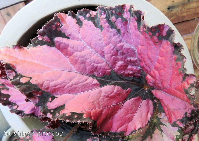 1`71204_blog challenge_blackandwhite_texture_begonia leaf05_colour