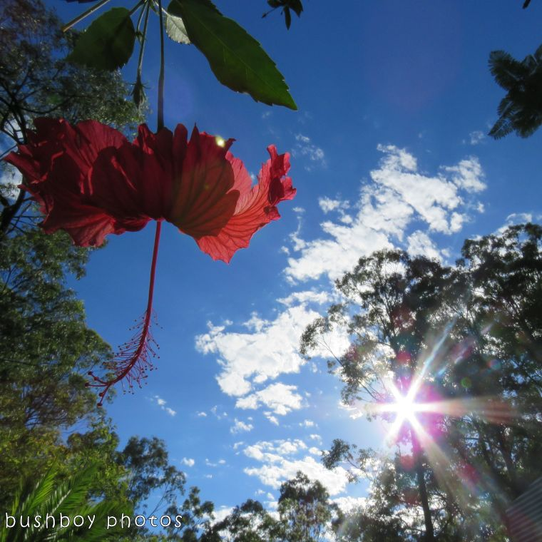 171213_blog challenge_squaresky_hibiscus sky