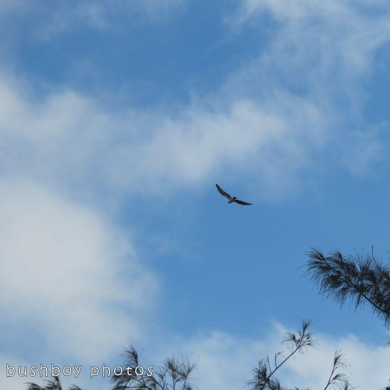 171214_blog challenge_squaresky_osprey