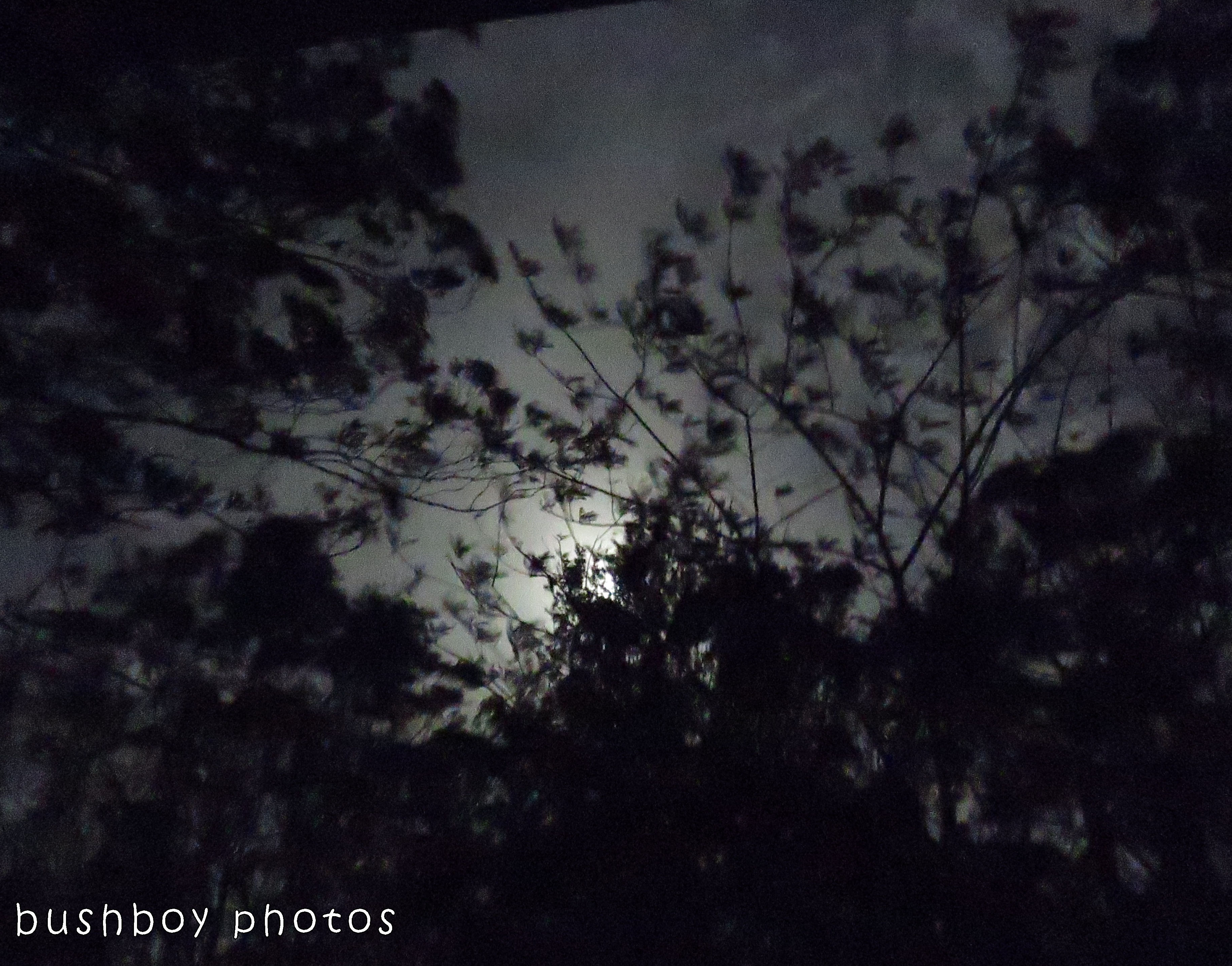 171221_blog challenge_darkness and light_moon04