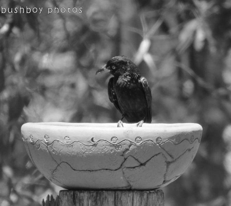 171222_blog challenge_halfcircle_domes_arches_birdbath