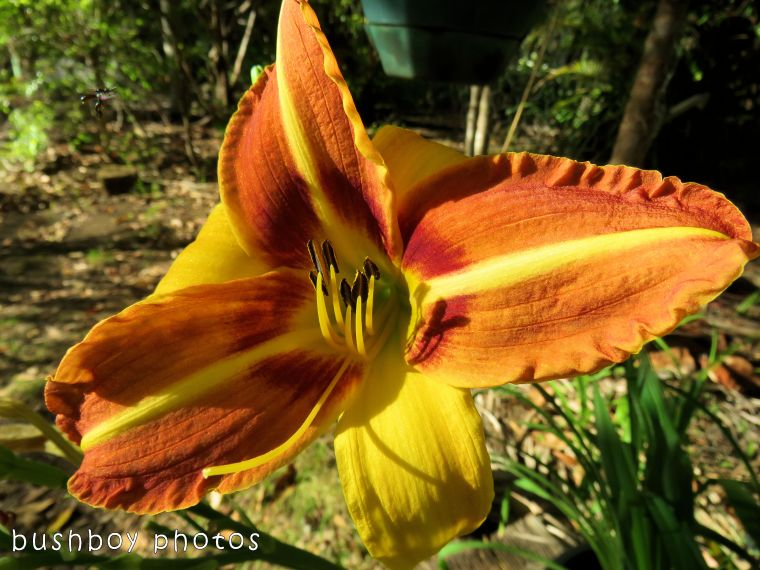 day lily_named_home_nov 2017