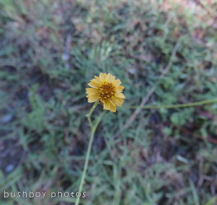 flower_yellow_named_home_nov 2017