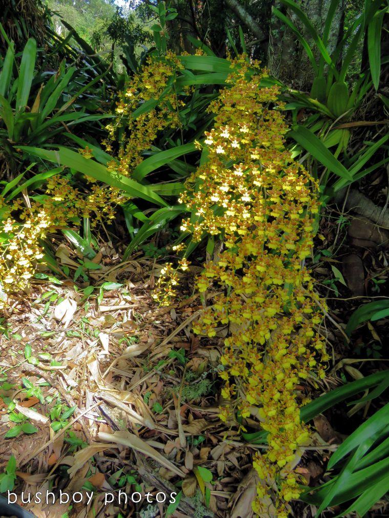 orchid_whole plant_named_modanville_nov 2017