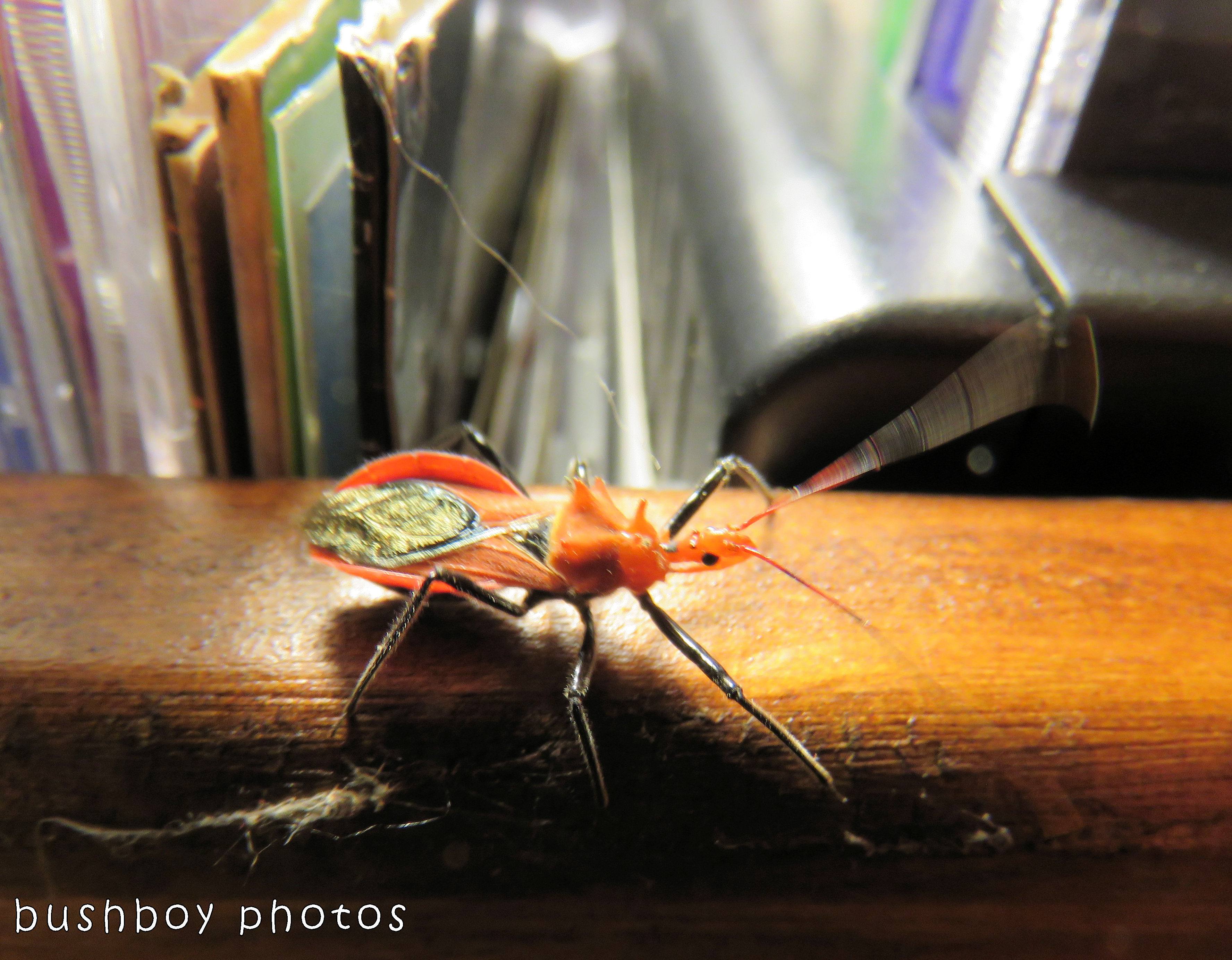 assassin bug_named_home_dec 2017