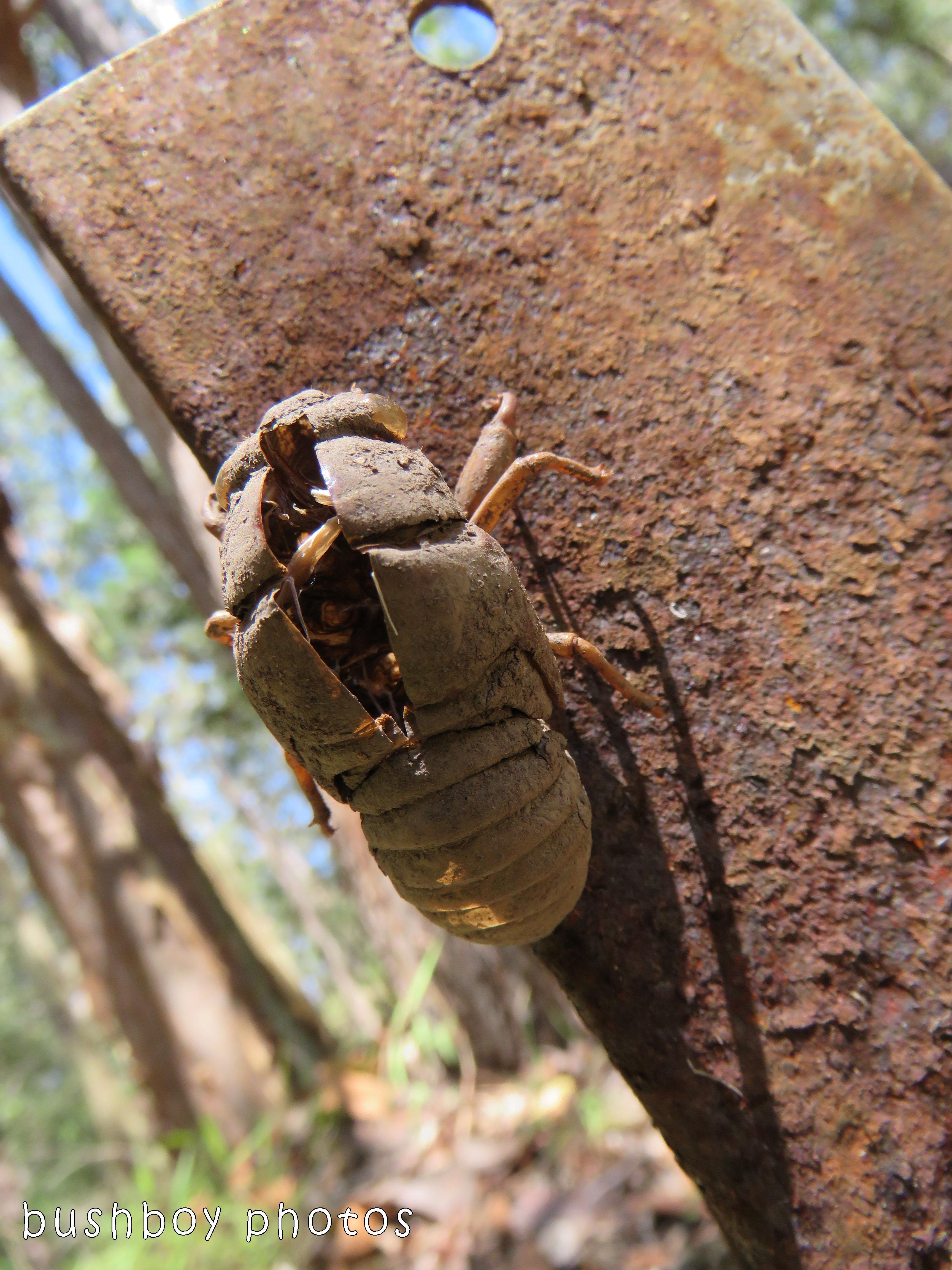 cicada shell_steel post_named_home_dec 2017