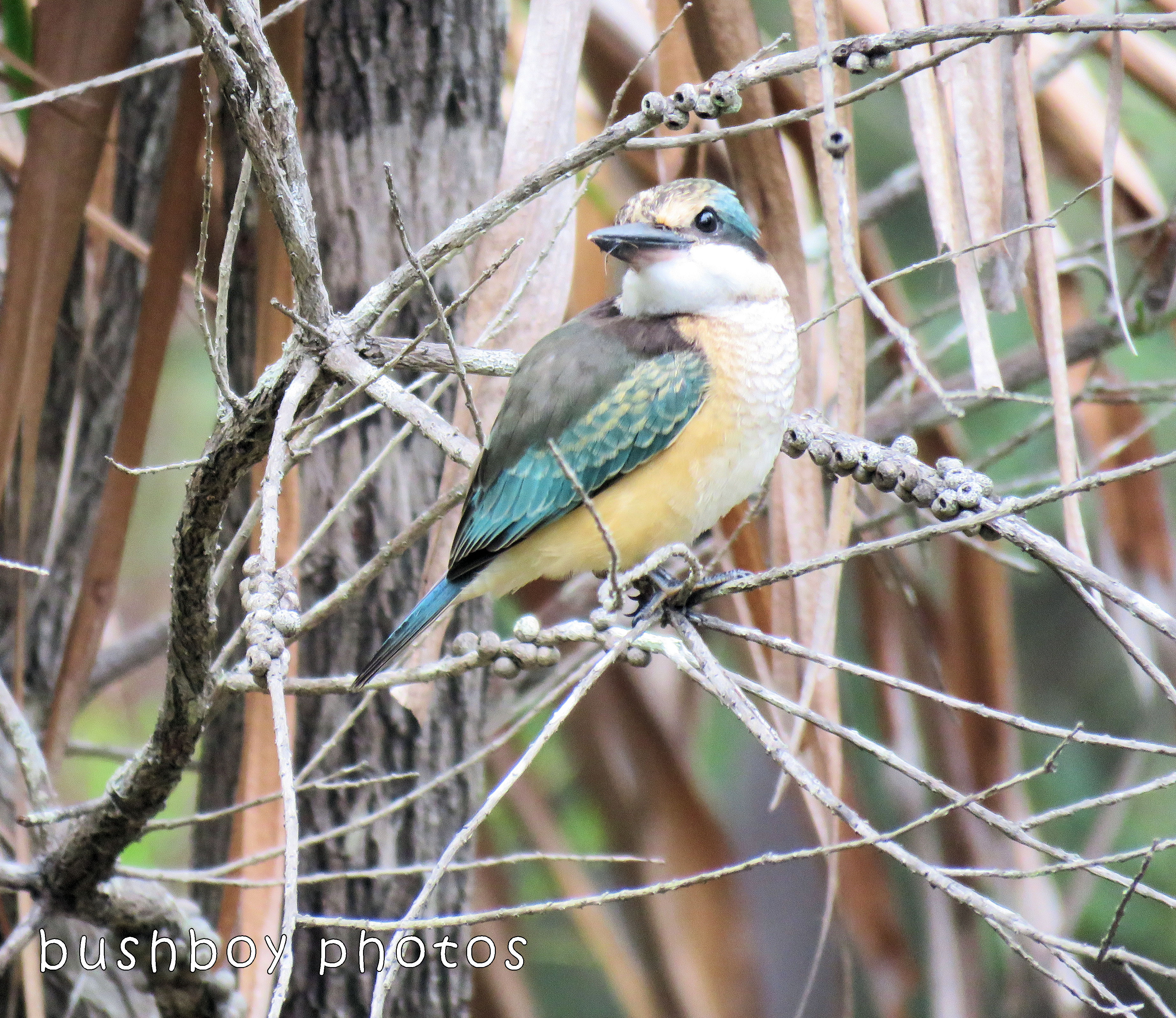foredt kingfisher_named_home_dec 2017 - Copy