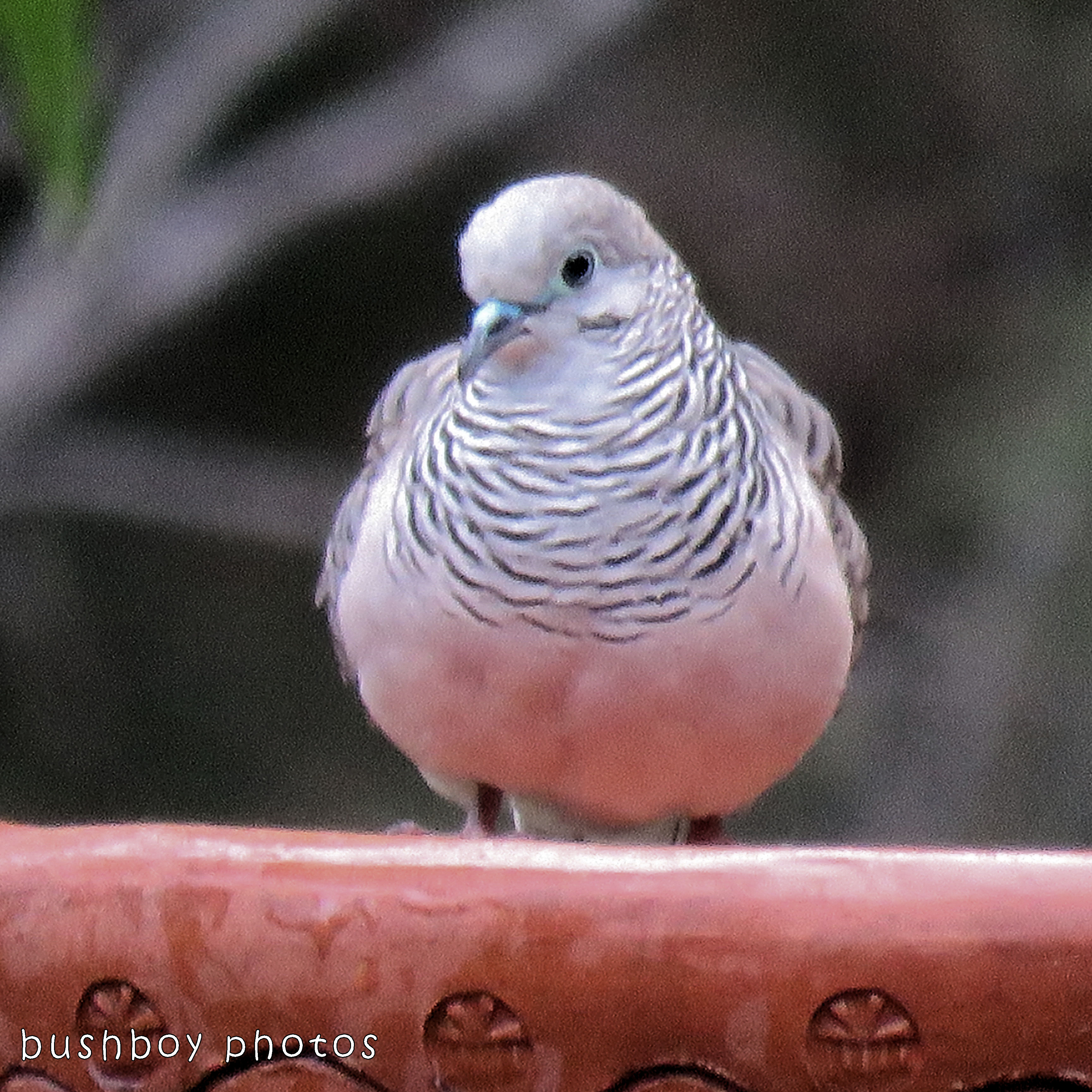 peaceful dove_named_home_dec 2017