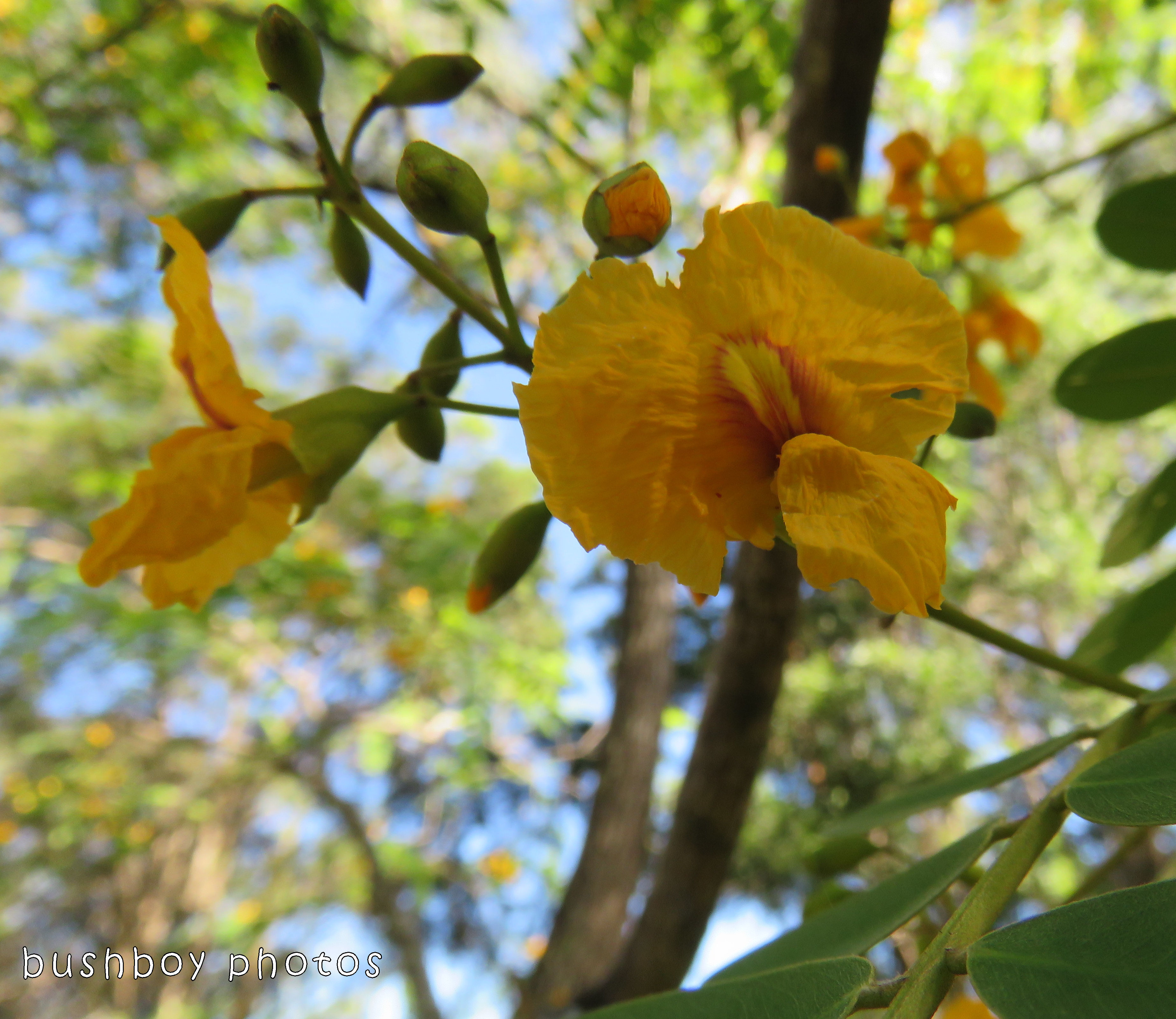 race horse tree_flower_named_home_dec 2017