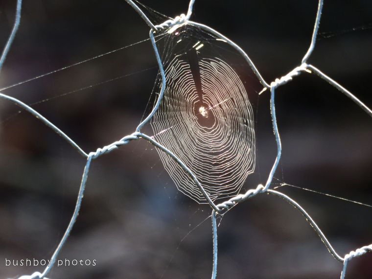 spiders web_wire fence_named_home_dec 2017