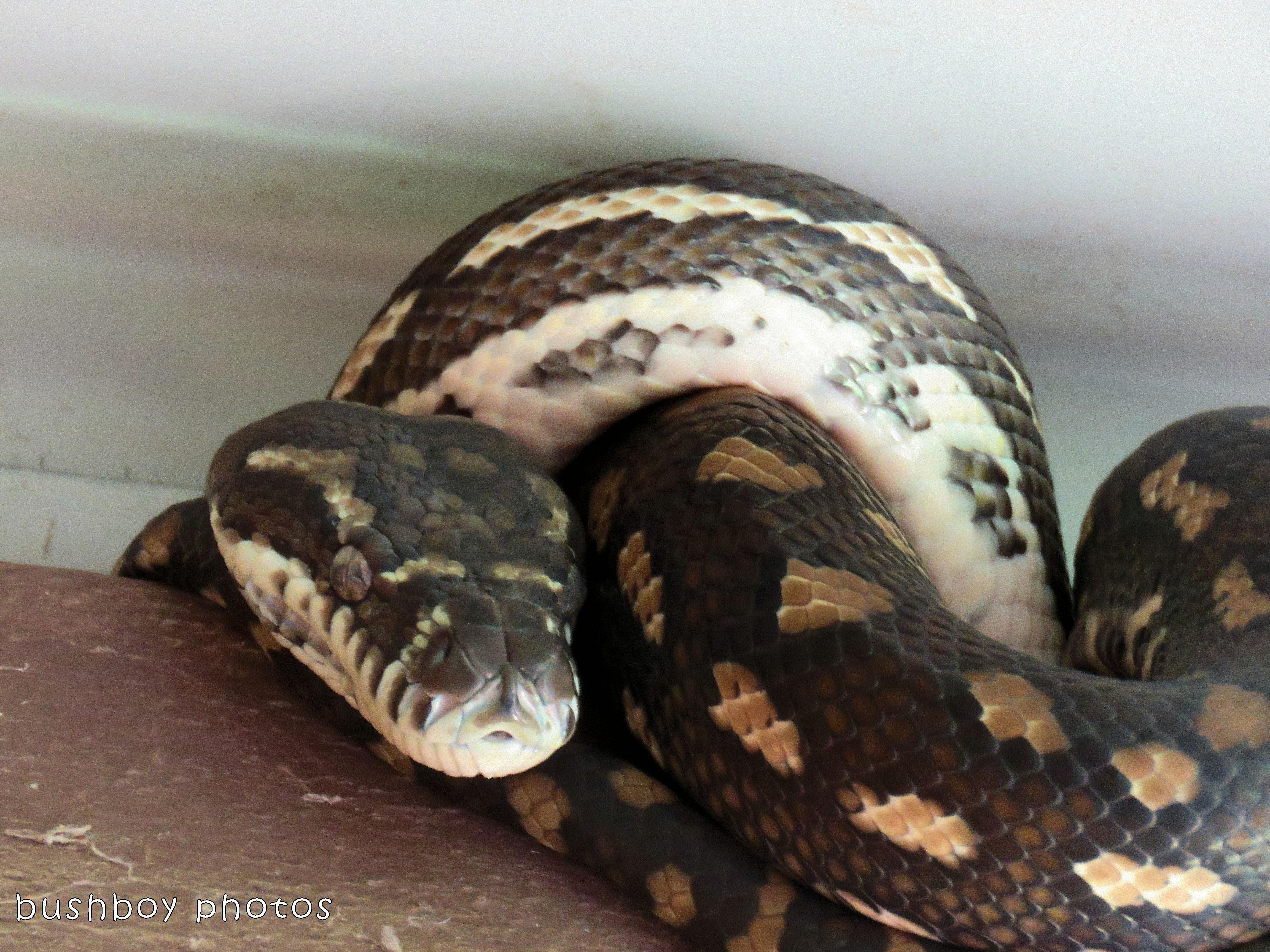 180215_letter z_snake close