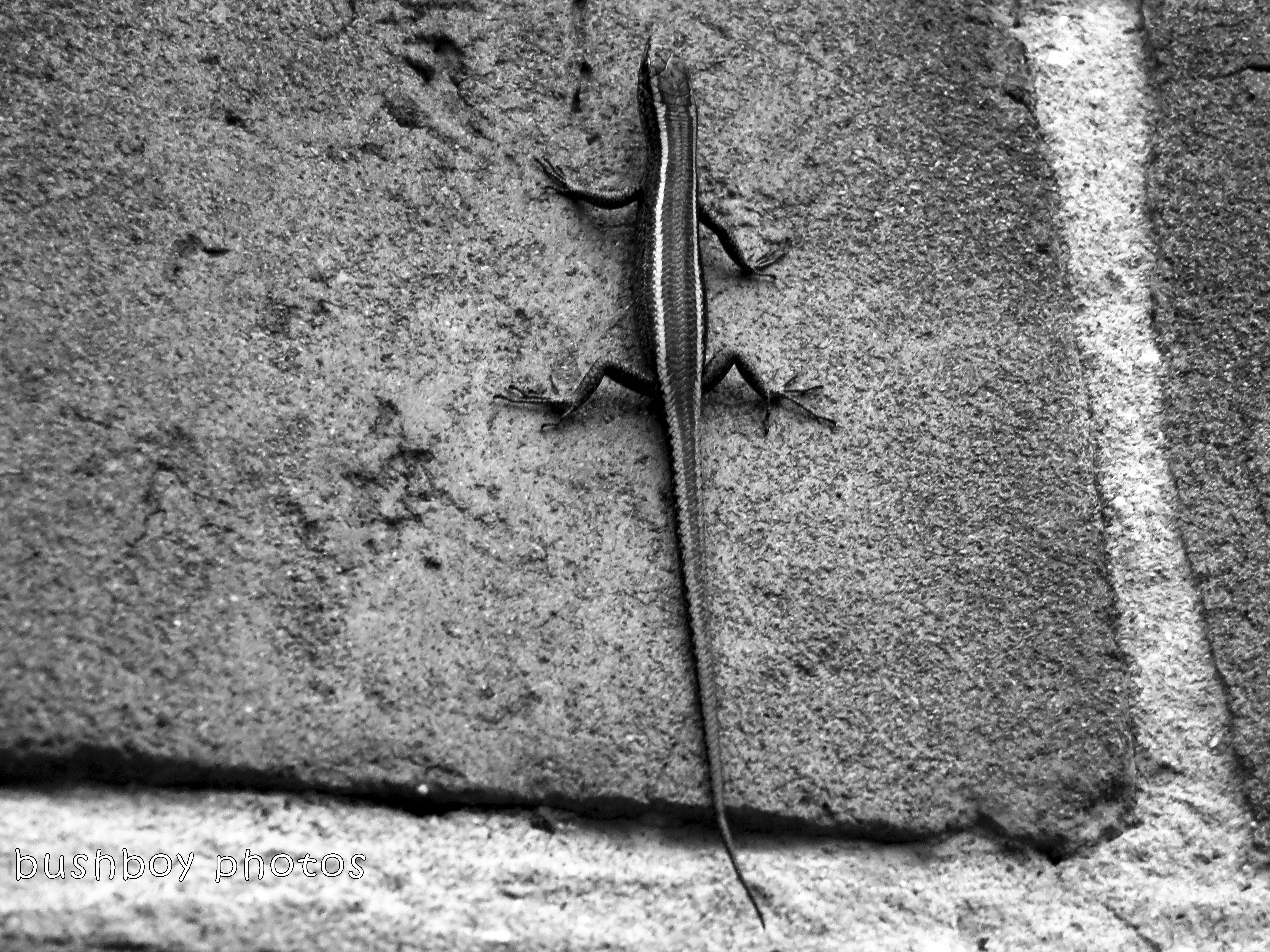 180228_blog challenge_traces of the past_grafton catherdral_skink