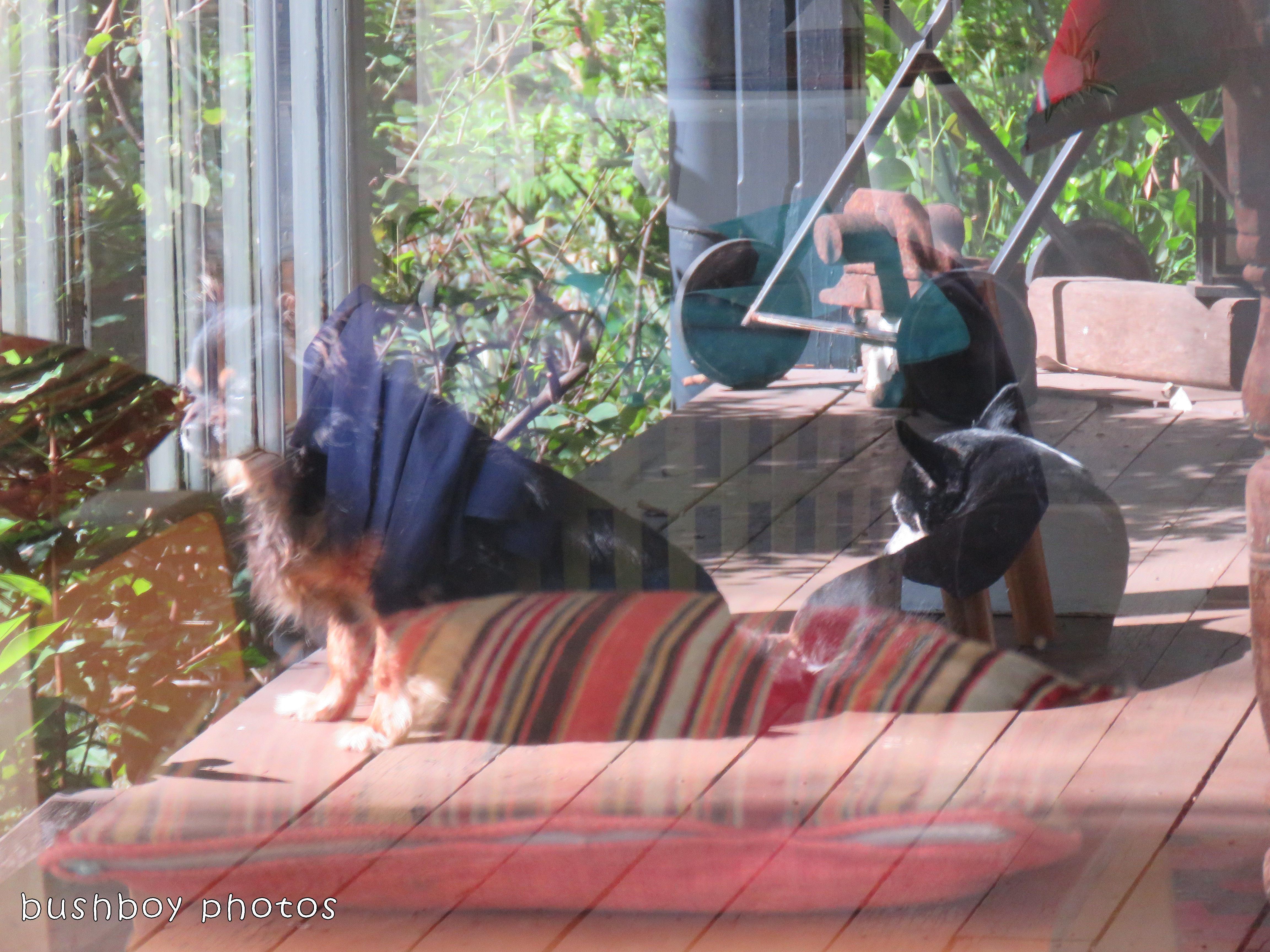 180228_odd ball_inside outside_dogs