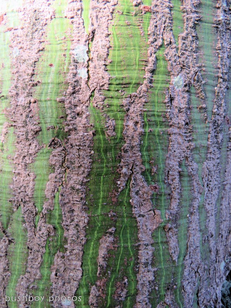 bark marking_named_ballina_jan 2018