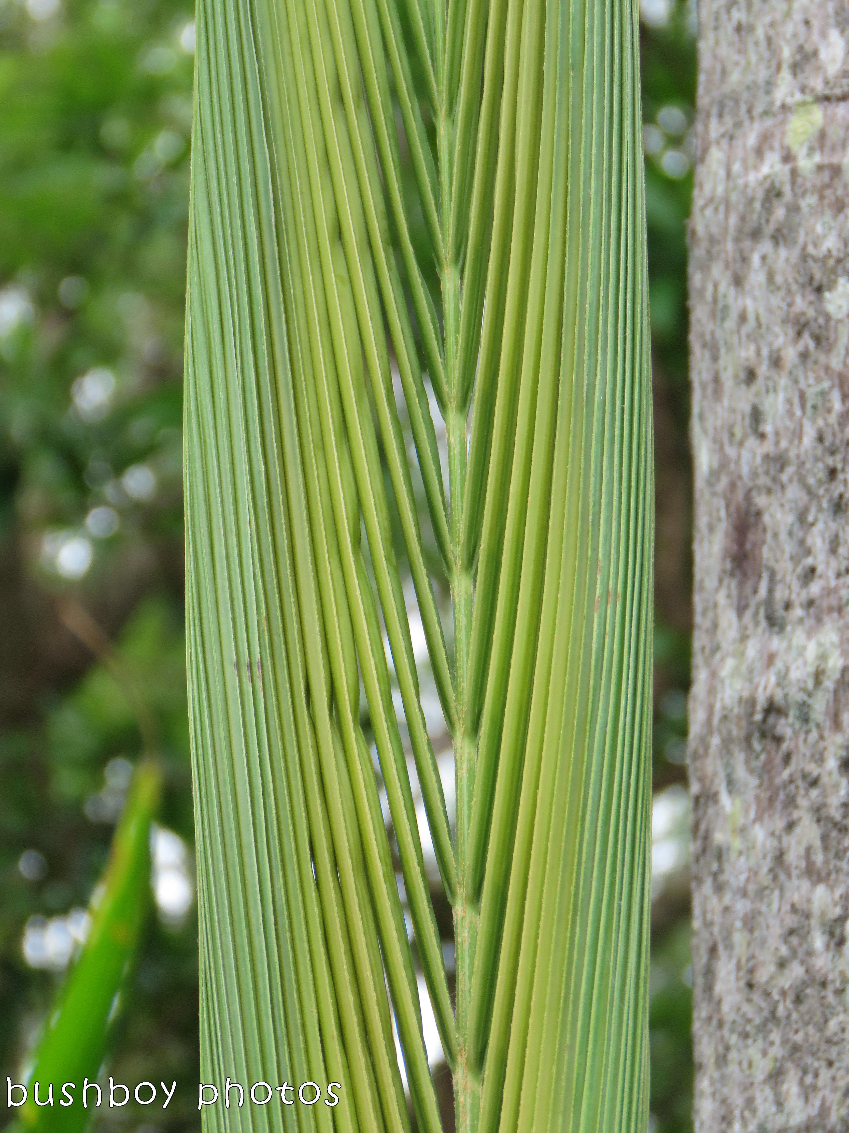 180305_blog challenge_slivered_palm