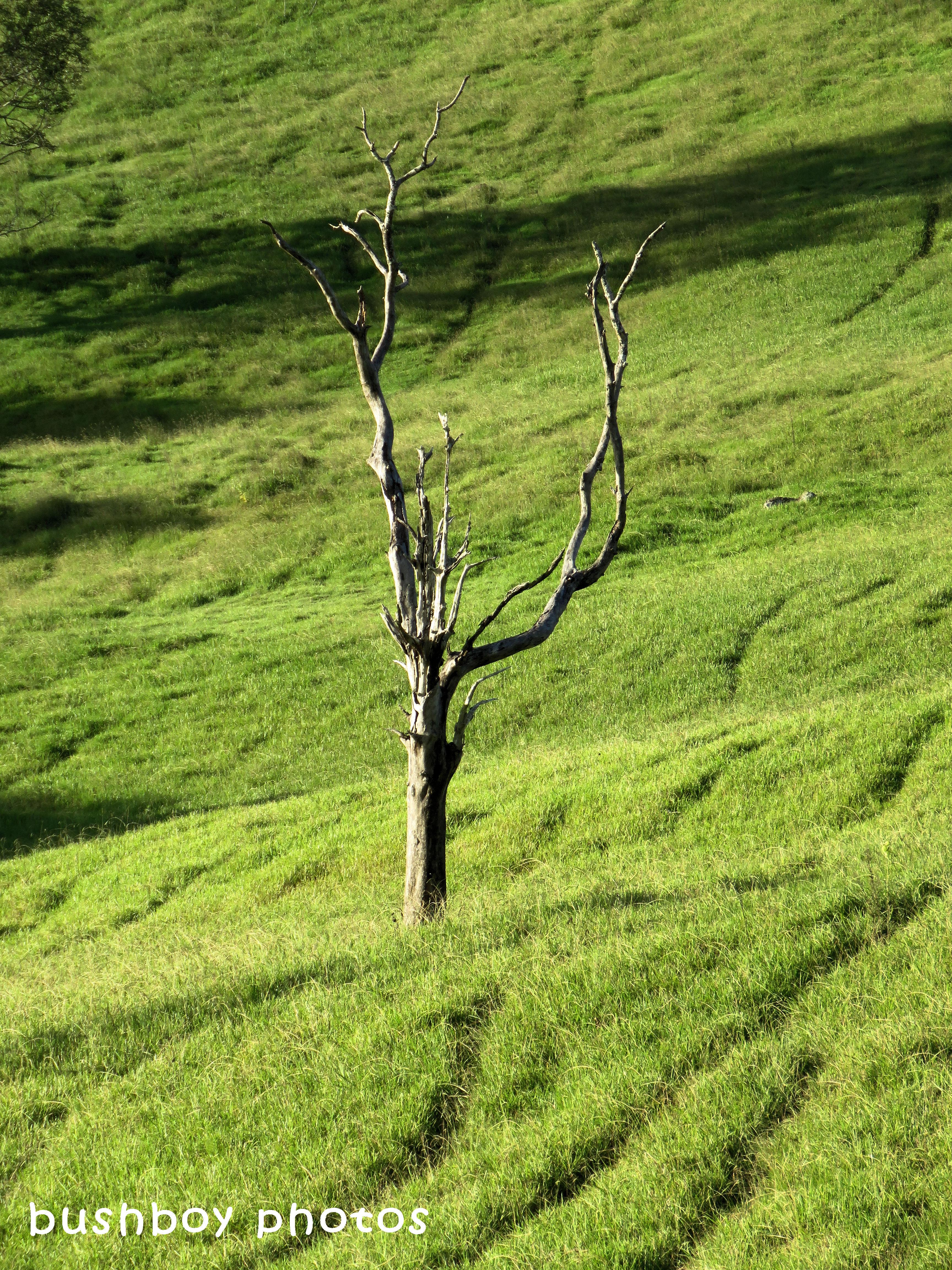 180318_time_tree