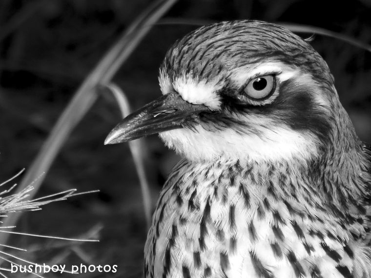 180323_faces_blackandwhite_curlew