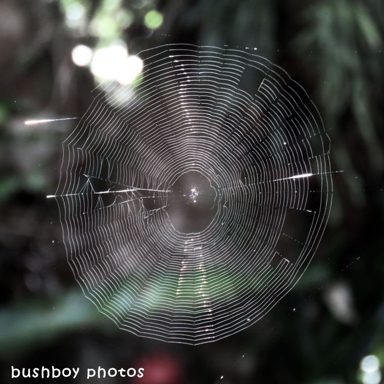 180324_spiders web_named