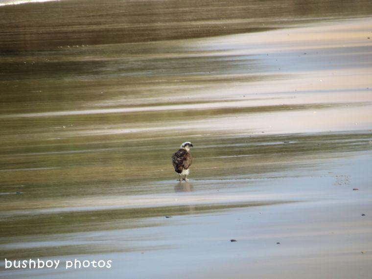 180328_blog challenge_alone_osprey