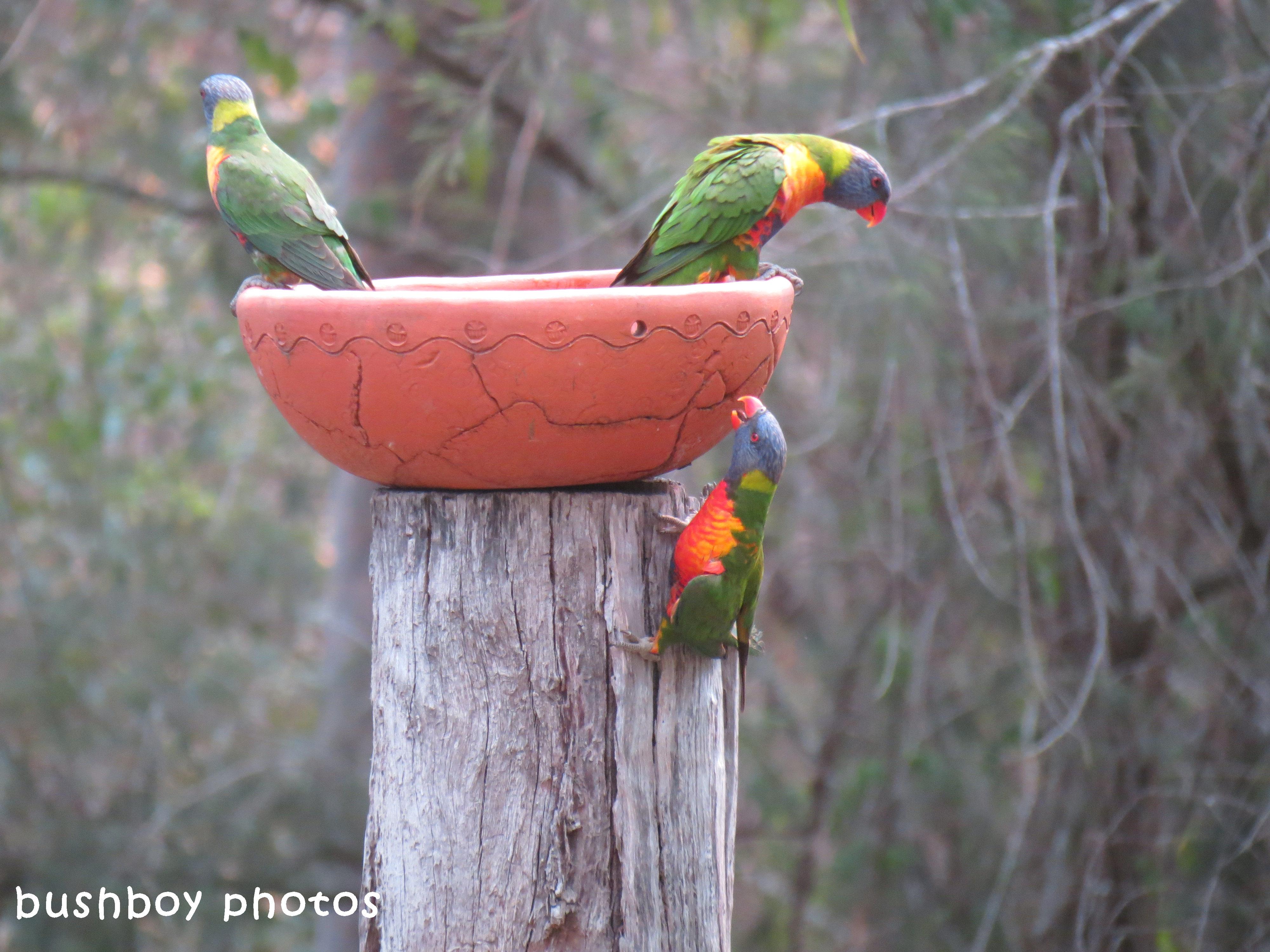 180329_blog challenge_quartet_rainbow lorikeets1