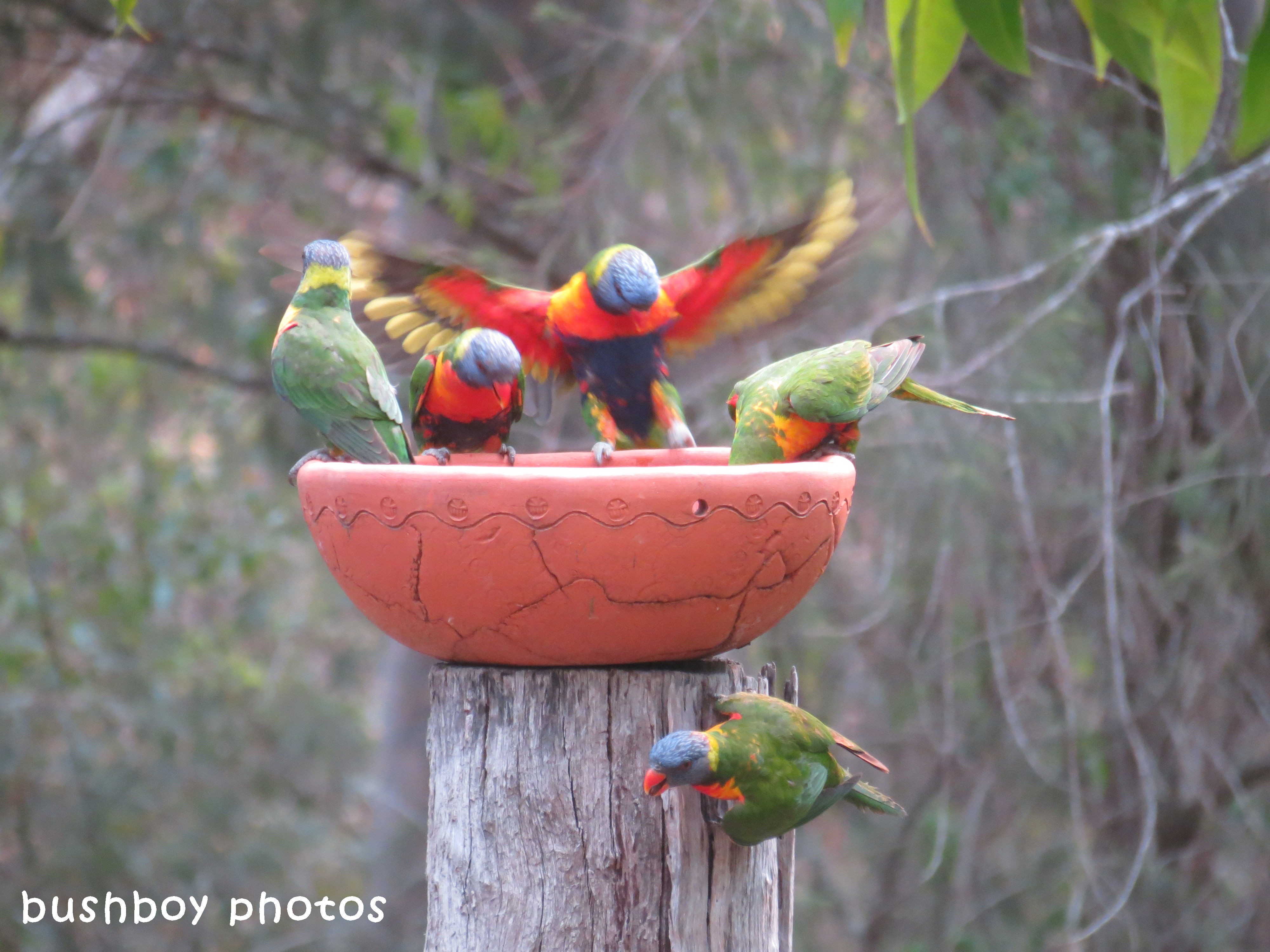 180329_blog challenge_quartet_rainbow lorikeets2