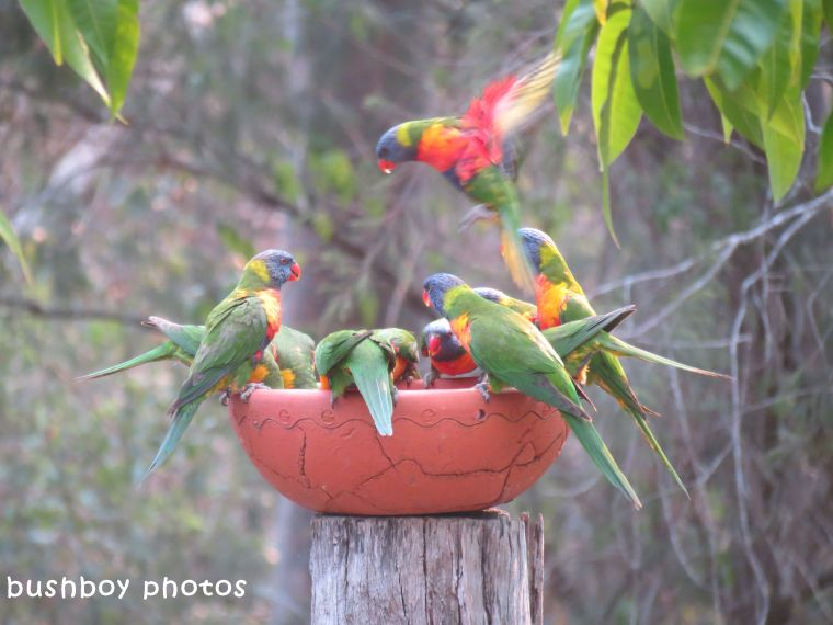 180329_blog challenge_quartet_rainbow lorikeets3