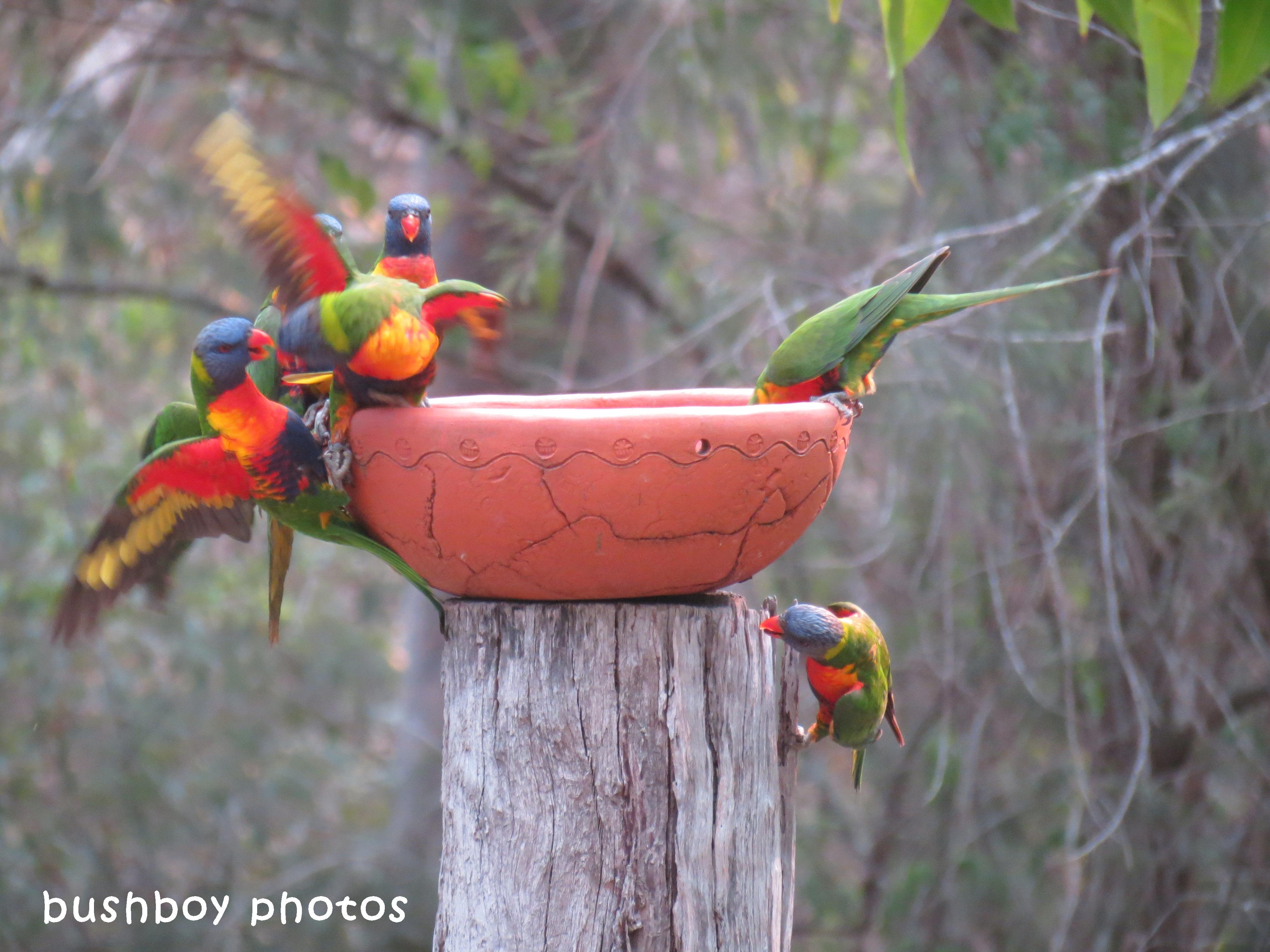 180329_blog challenge_quartet_rainbow lorikeets4