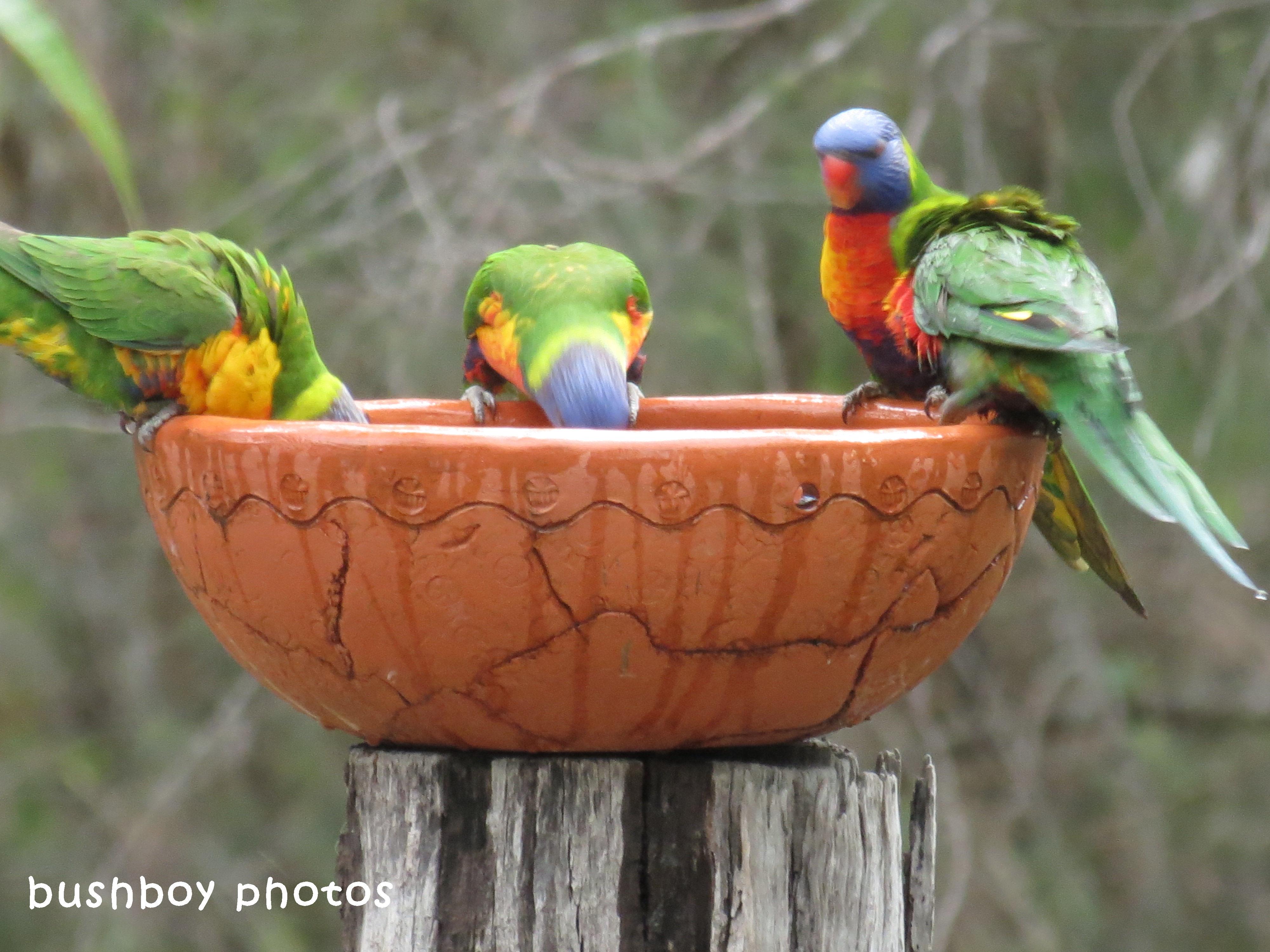 180329_blog challenge_quartet_rainbow lorikeets5